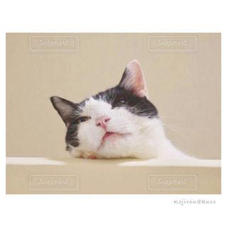 眠いのにゃの写真・画像素材[2317822]