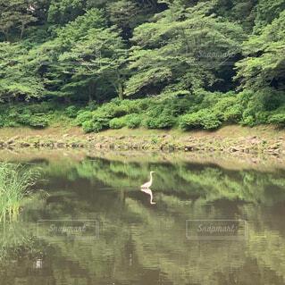自然,風景,鳥,屋外,湖,川,水面,池,景色,樹木,草木,白い鳥