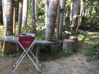 森の前に座っている椅子 - No.723309