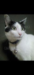 猫,動物,屋内,白,黒,子猫,座る,探す