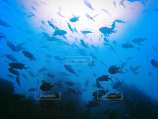 水中,伊豆,海底,魚達