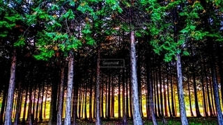 森林,木,森,樹木,明るい,カラー,フォトジェニック