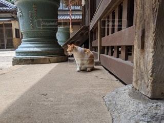 猫,動物,屋外,神社,ねこ,寺,ネコ