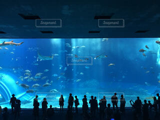 美ら海水族館の巨大水槽前の人々の影の写真・画像素材[4487913]