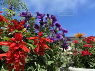 花,春,庭,青空,ガーデニング