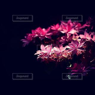 花,鮮やか,草木,堂々と,際立ち