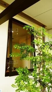 風景,花,屋内,窓,樹木,植木鉢,壁,観葉植物,草木