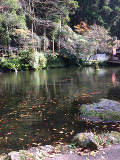 池と紅葉の写真・画像素材[4520026]