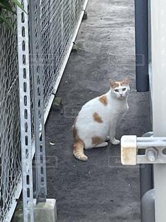 フェンス前にて待つ猫の写真・画像素材[4555101]