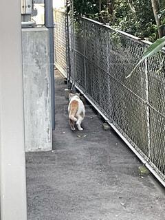 フェンスの横を歩く猫の写真・画像素材[4555102]