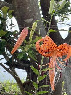 花と蜘蛛の巣の写真・画像素材[4616904]