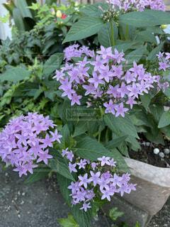 いっぱい咲いたの写真・画像素材[4936829]