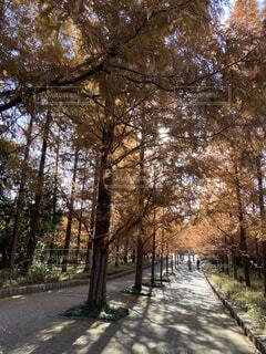 自然,公園,紅葉,木漏れ日,並木道