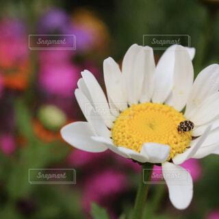 風景,花,春,白,カラフル,花びら,光,てんとう虫,景観,草木,日中,フローラ