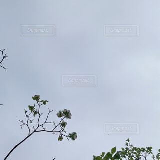 空,動物,屋外,白,樹木,景観,草木