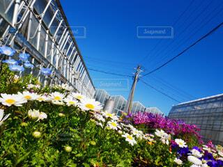 風景,空,花,屋外,白,カラフル,投稿,景観,草木