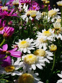 風景,花,屋外,白,カラフル,投稿,景観,草木