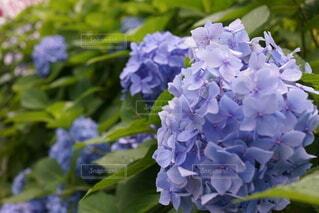 花,緑,花束,草木,ガーデン,ブルーム,フローラ