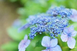 花,草木,フローラ