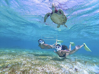 ウミガメと泳ぐの写真・画像素材[4520094]