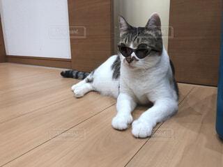 猫,動物,にゃんこ,屋内,白,ねこ,床,座る,ネコ科,ネコ