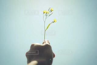 花,青空,黄色,ぼかし,自然光