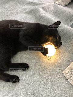 おもちゃにかぶりつく猫の写真・画像素材[4594546]