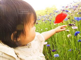 花,少女,人物,人,赤ちゃん,幼児,少し