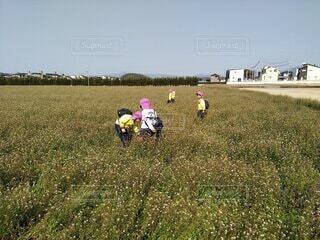 屋外,草原,景色,草,こども,道草,友達,日中