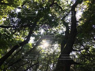 空,公園,森林,屋外,葉,日光,樹木,草木