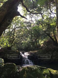 自然,屋外,水面,滝,樹木,洞窟,草木