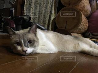 猫,動物,屋内,白,景色,床,子猫