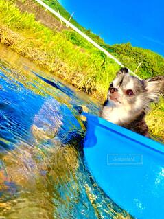 犬,自然,動物,青,川,可愛い,川遊び