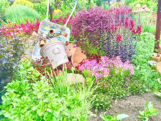 花園のクローズアップの写真・画像素材[4517405]