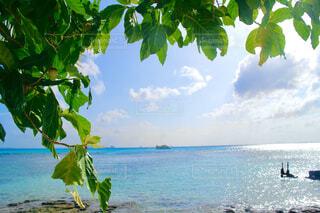 水の体の近くのビーチにあるヤシの木のグループの写真・画像素材[4607936]