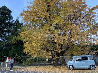 空,秋,屋外,車,樹木,草木,車両,イチョウの木,陸上車両