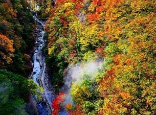 自然,風景,秋,紅葉,森林,観光地,景色,樹木,名所,小安峡