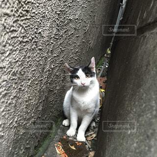 猫,動物,屋外,白,ねこ,座る,覗き,何?,たま