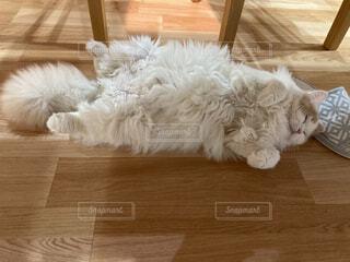 猫,動物,屋内,景色,床,木目,スリッパ,もふもふ