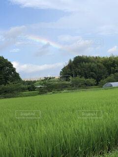 自然,空,屋外,緑,草原,虹,景色,草,樹木,草木