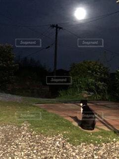 猫,屋外,静寂,黒,樹木,月夜