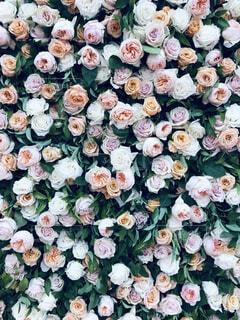 女性,海,花,サーフィン,バラ,アメリカ,景色,背景,薔薇,料理,装飾,ローズ,西海岸,カリフォルニア,おしゃれ