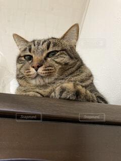 猫,動物,屋内,景色,子猫,座る,見下ろす,ネコ科,猫様,偉そう,見下す,上から目線