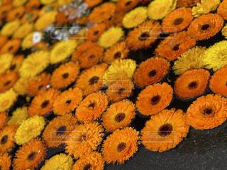 オレンジの花の写真・画像素材[4500221]