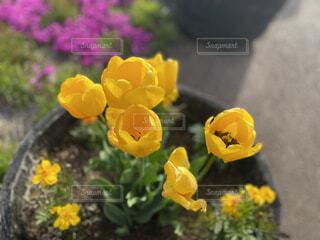 花,フラワー,黄色,イエロー,草木,キレイ,フローラ