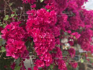 花,庭,ピンク,赤,フラワー,景色,草木,ガーデン,ブロッサム,フローラ