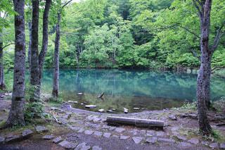 自然,森林,屋外,湖,水面,草,樹木
