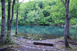 自然,森林,屋外,湖,水面,池,草,樹木