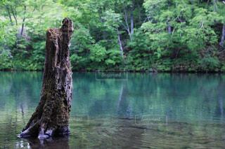 自然,森林,屋外,湖,川,水面,池,樹木