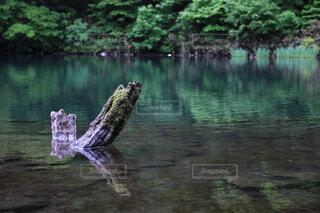 自然,屋外,湖,水面,池